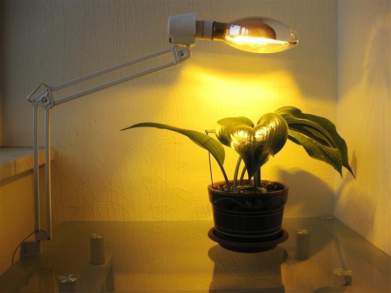 Натриевая лампа для растений