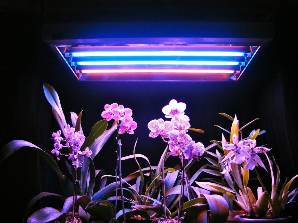 Люминесцентная лампа для растений